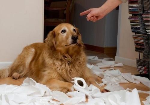 cachorro-bagunca
